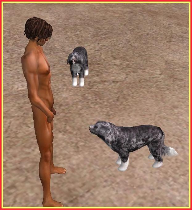 dog2_001b