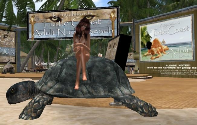 ella turtle_001b