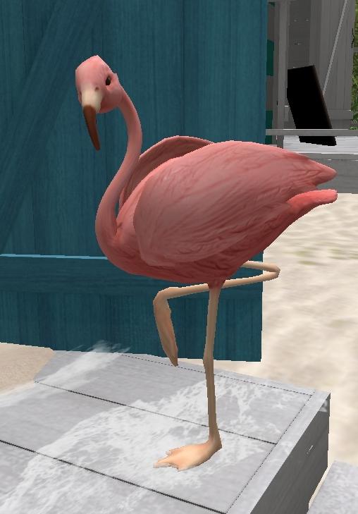flamingo_001b