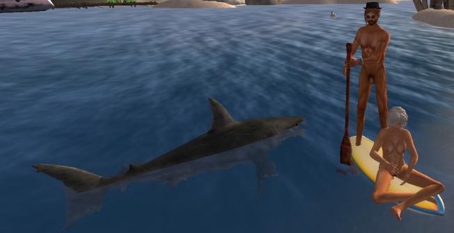 howie jan shark_001b