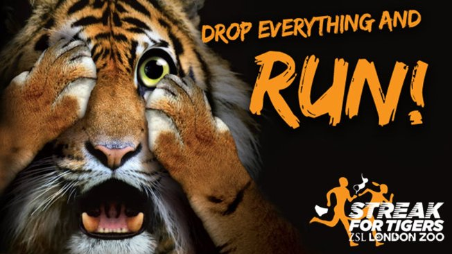 streak-for-tigers-new-site