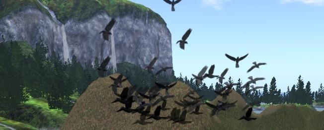 ravens_001b